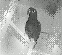 Mon perroquet