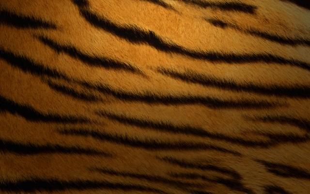 Tiger 10.4.1