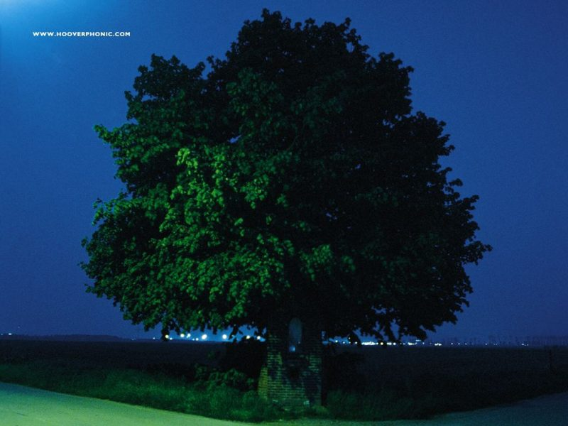 L'arbre sur la pochette
